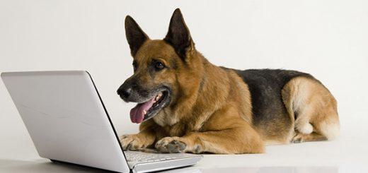 antkakliai šunims